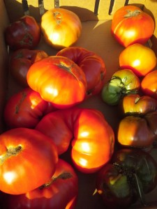 heirloom tomatoes from 'the Square'